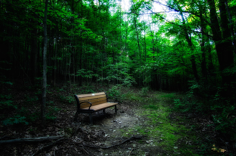 Bench on Rob's Trail