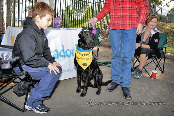 """<a href=""""http://www.rescuealabrador.com/"""">rescue a Labrador.com</a>"""