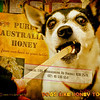there was a stand at the fair selling local honey .. Tanners .. the lady gave me different honey to try on a paddlepop stick .. she said i should give some to katee to try too .. she liked it even tho her face seems to tell another story .. !!