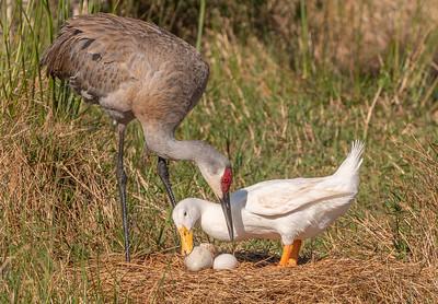 Sharing the Nest