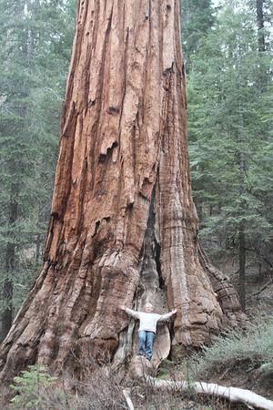 28 марта 2013. Калифорния. Национальный парк Йосемити. Роща Марипоса: в мире гигантских секвой.
