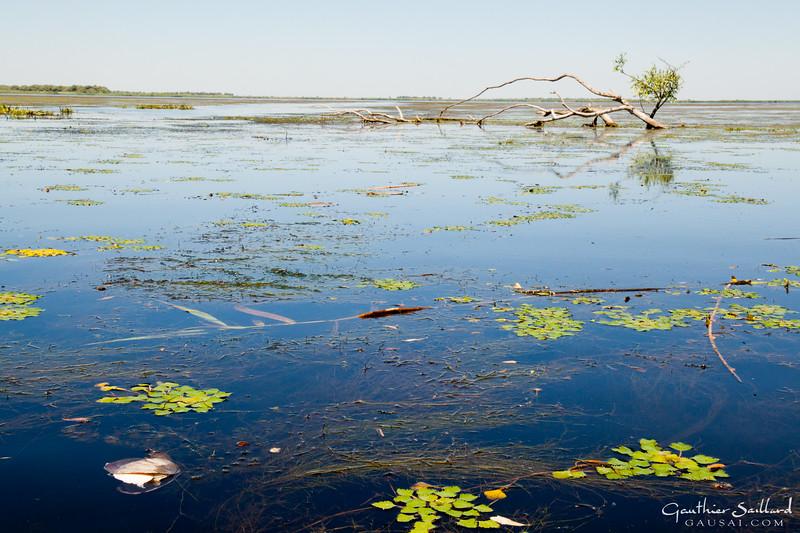 Flussmuschel im Matitasee