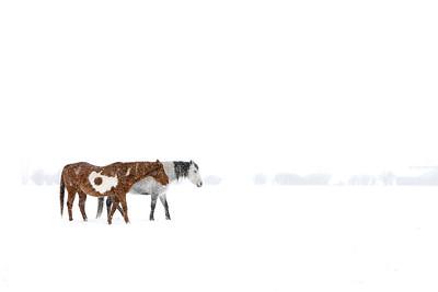 Utah Horses