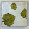 Leaf Study<br /> 8x8