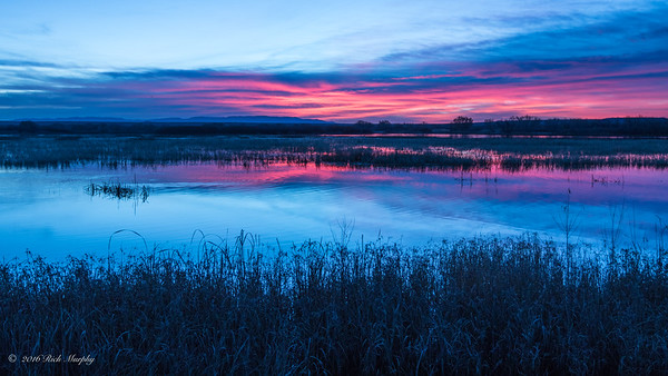 A Natural Delight. Bosque Del Apache NM