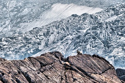 "Upper Enchantments Goat - Pic by Roman ""The Day Hiker""  =)"