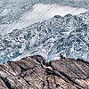 """Upper Enchantments Goat - Pic by Roman """"The Day Hiker""""  =)"""