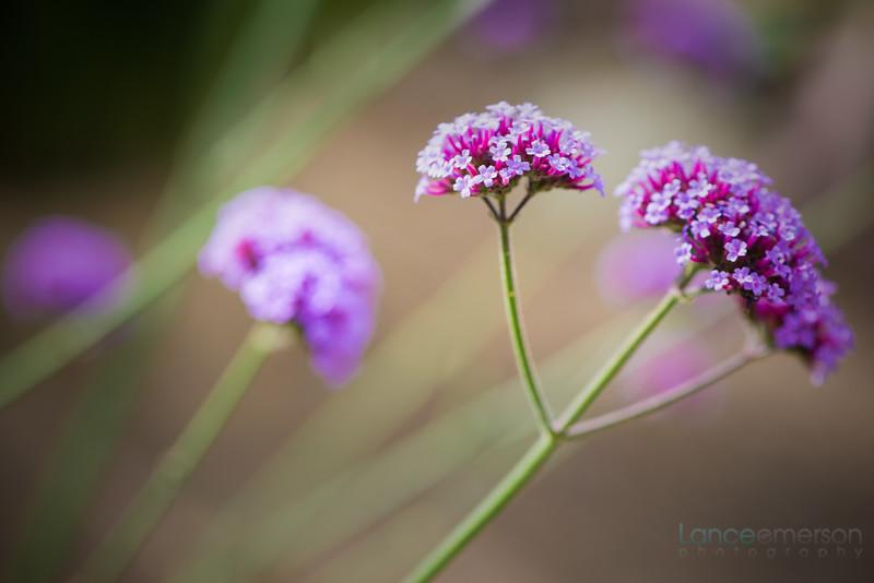 Encinitas Botanical Gardens (59 of 74).jpg