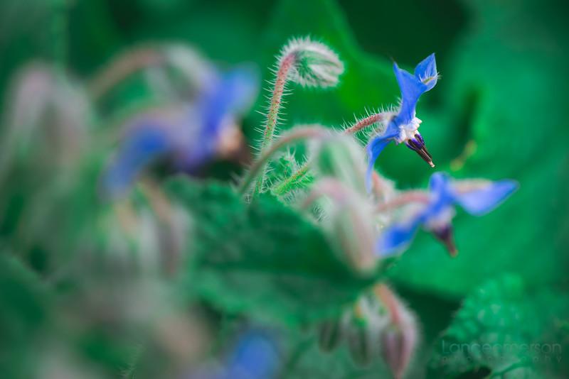 Encinitas Botanical Gardens (22 of 74).jpg