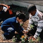 Students Plant a Garden (Dallas, TX)