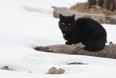 Wild House Cat
