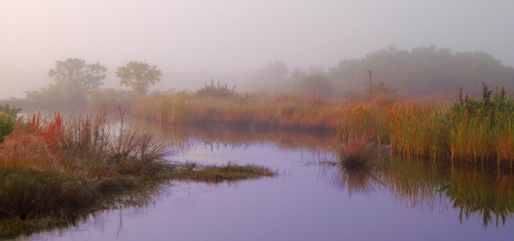Honorable Mention<br /> Water Fog Grasses<br /> Ed Cohen