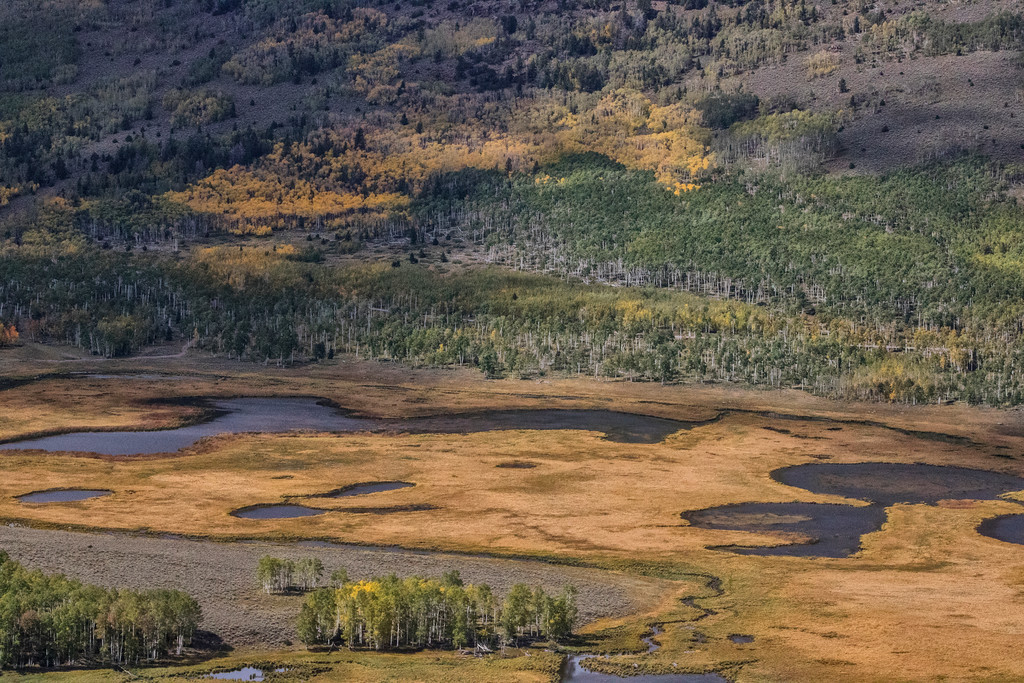 Pando Forest: Aerial View