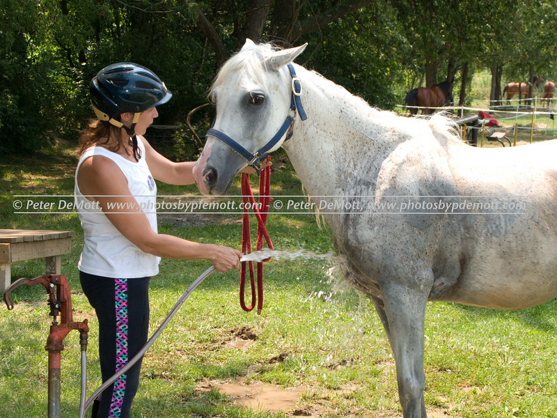 Tazmanian_Trot_CTRIMG_0089