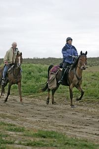 Clipped horse pair_IMG_4637