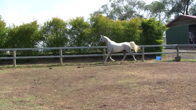Lindall Footloose, video taken 12th January 2013.