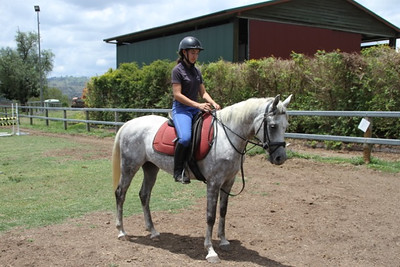 Melcot Shahil 2011 gelding. FOR SALE