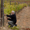 Carlos Gosálbez, viticultor valenciano de 74 años