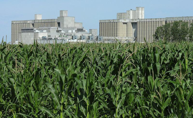 Corn beside a new ethanol facility in North Dakota