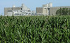 Corn beside a new ethanol facility in North Dakota