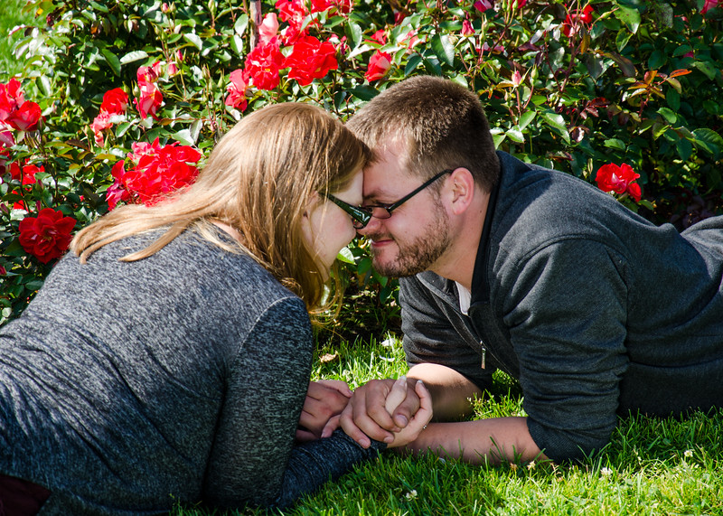 engagement photo of couple in front of rose bushes