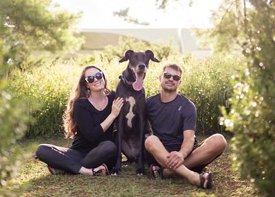 113 engagement dog