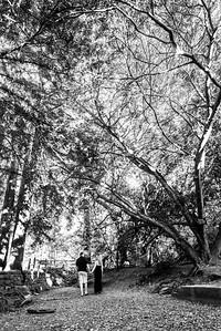 3311_d800b_Carole_and_Patrick_Shoup_Park_Los_Altos_Engagement_Photography