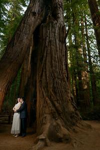 0204_d800b_Alex_and_Yee_Henry_Cowell_Park_Felton_Wedding_Bridal_Portrait_Photography
