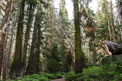 Chris   JeanAnn Taft Point Yosemite Engagement Session 005