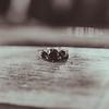 Jacklyn's Ring_006