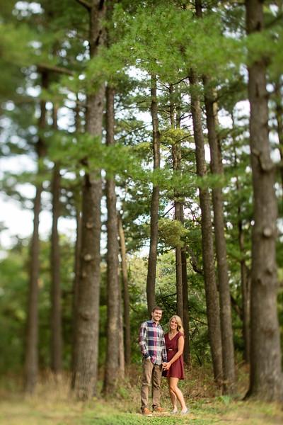 Pine Trees Far