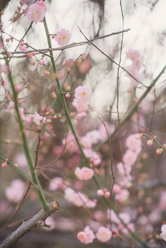 la-arboretum-los-angeles-photographer1140