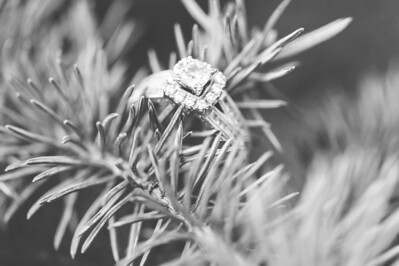 Maxey & Erb Engagement ~1 2014-028