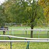 Race horse training track across the street from our Newmarket apartment