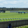 Fixing the divots at Newmarket racecourse