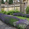 conservatory interior of lavender