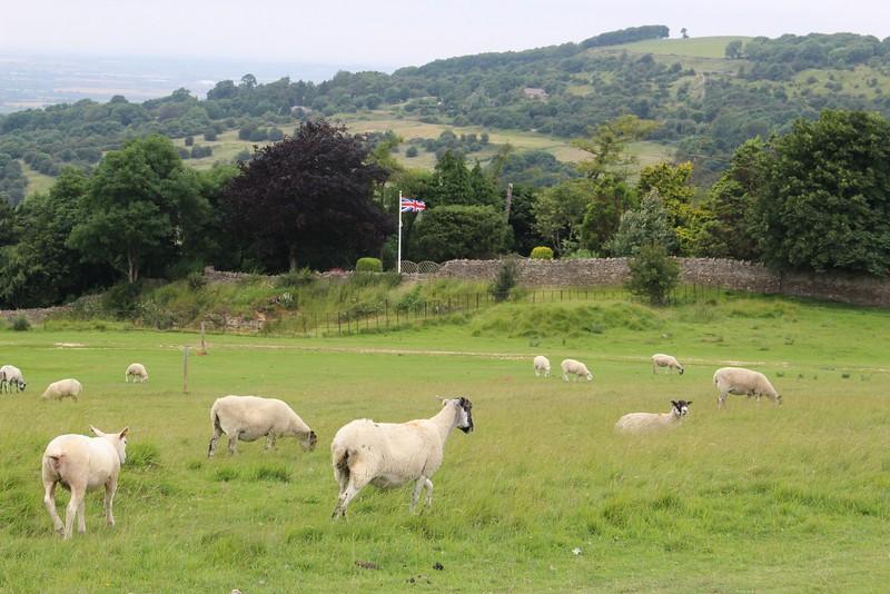 sheep and Union Jack