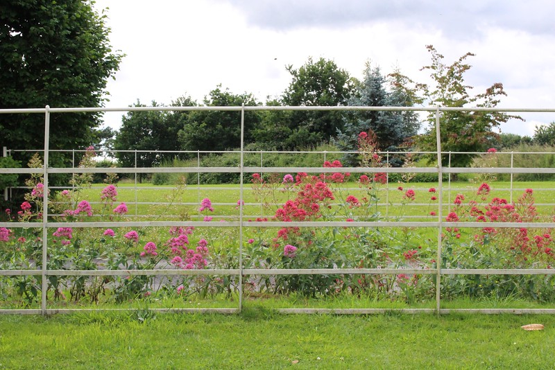 flowers in front of fence by road