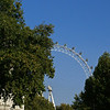 London Eye from St. James Park, near Buckingham Palace