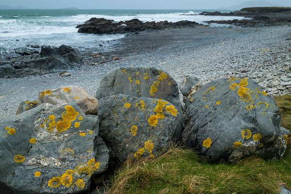 Yellow Lichen, Barnabaum Point