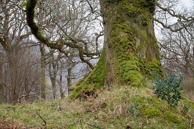 Sheeffrey Wood