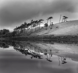 Tree Reflection, near Newport, Ireland
