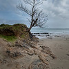 Struggling Tree, Old Head Beach, near Westport, Ireland