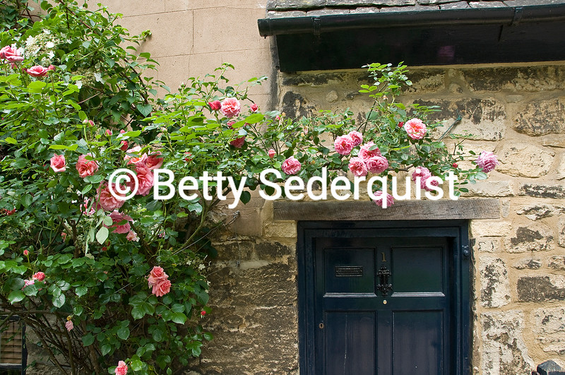 Roses and Old Doorway, Oxford