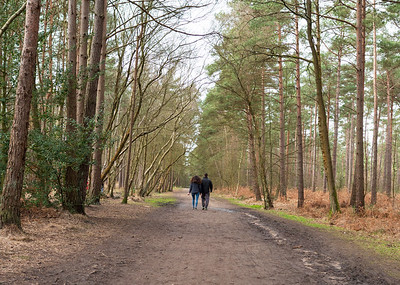 Couple on a walk in Swinley forest