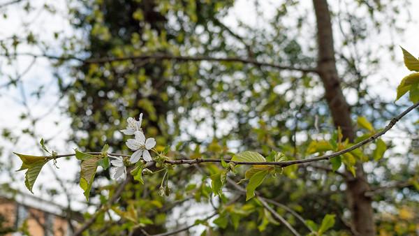 White flower in spring