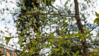 White flower in spring