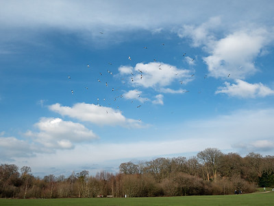 Flight of birds over South Hill Park.