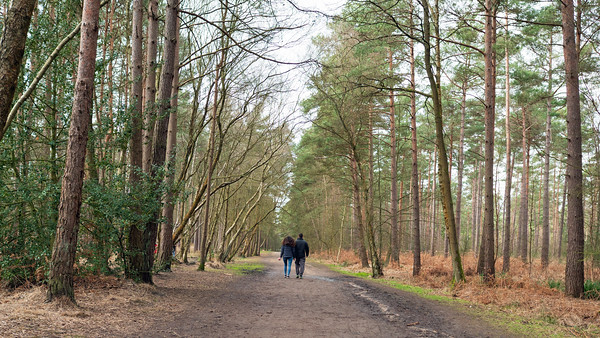 Happy couple walking in Swinley Forest, Bracknell