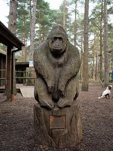 Go dog or Go Ape